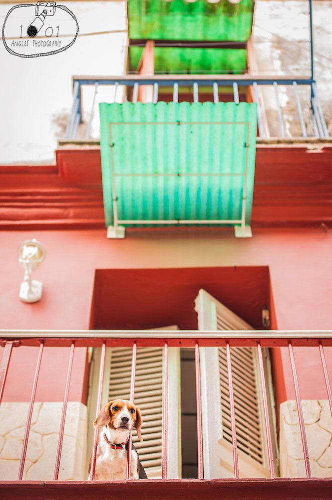 Friendly Puppy on Balcony in Havana Vieja