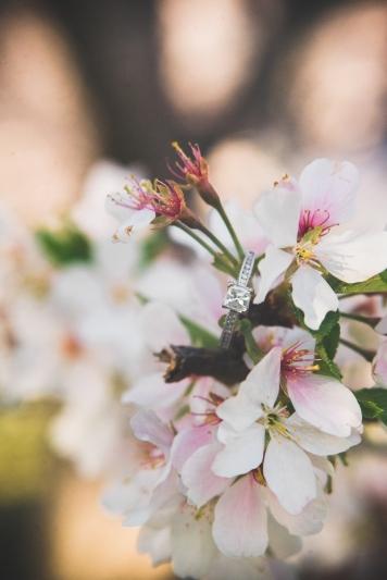 Tidal Basin Cherry Blossom Engagement Session-1
